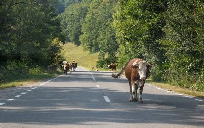 Perill a la carretera: Animals