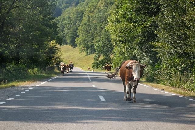 Perill a la carretera: Animals